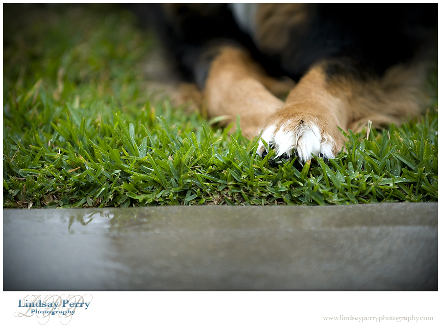 – Rainy Days and Wet Paws –